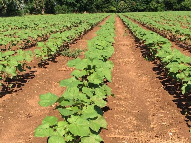 Alabama Cooperative Extension offers  Training for use of Dicamba and 2,4-D Resistant Crops