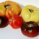 Registration Open for Fall Tomato School
