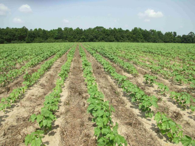 XtendiMax, Engenia, and Enlist Duo Now Registered for Use in Florida