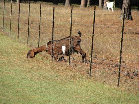 Learn how to make the grass greener on YOUR side of the fence! Photo by Jed Dillard