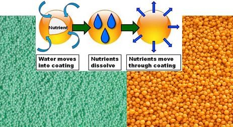 Fig. 1. Example of a coated fertilizer (left) and fertilizer coated with a urease and nitrification inhibitor, right. Coated fertilizer illustration courtesy of IPNI: http://www.ipni.net/