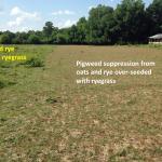 The portion of pasture that was over-seeded with ryegrass provided suppression of spiny pigweed.