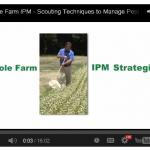 IPM Video