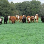 Jackson Cattlemen to Host Forage Variety Program October 4