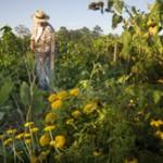 2014 Florida Organic Cost Share Program