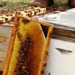 The NW FL Gulf Coast Beekeepers Workshop March 28
