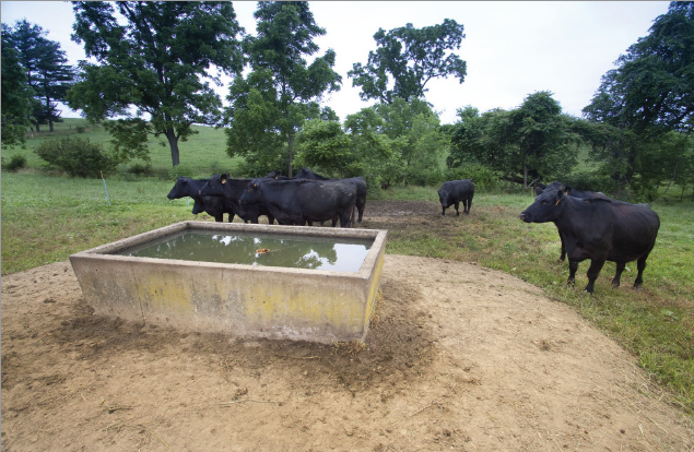 Solar Pump Systems For Watering Livestock Panhandle