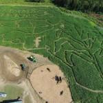 Agritourism - Corn Maze