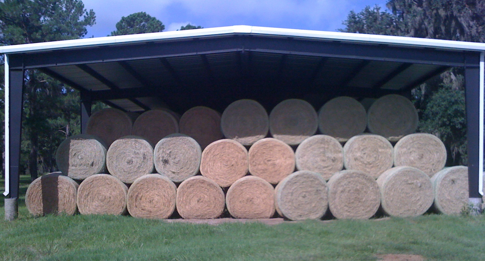 Well-made, dense hay bales maintain their quality during storage and decrease the amount of wasted hay and dollars during the winter feeding period. (Alachua, Florida)