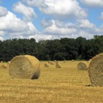 FSA Hay and Grazing Net: an Online Resource for Hay and Livestock Producers