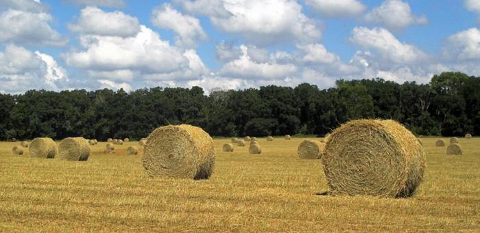 NFREC Hay Bales in Field
