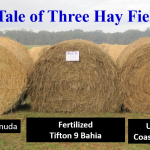 Three Hay Fields