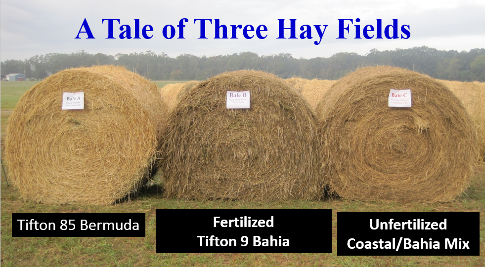 Three Hay Fields
