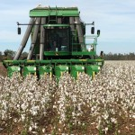 Cotton Harvest Now in Full Swing