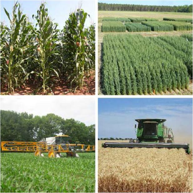 AL Corn & Wheat Short Course