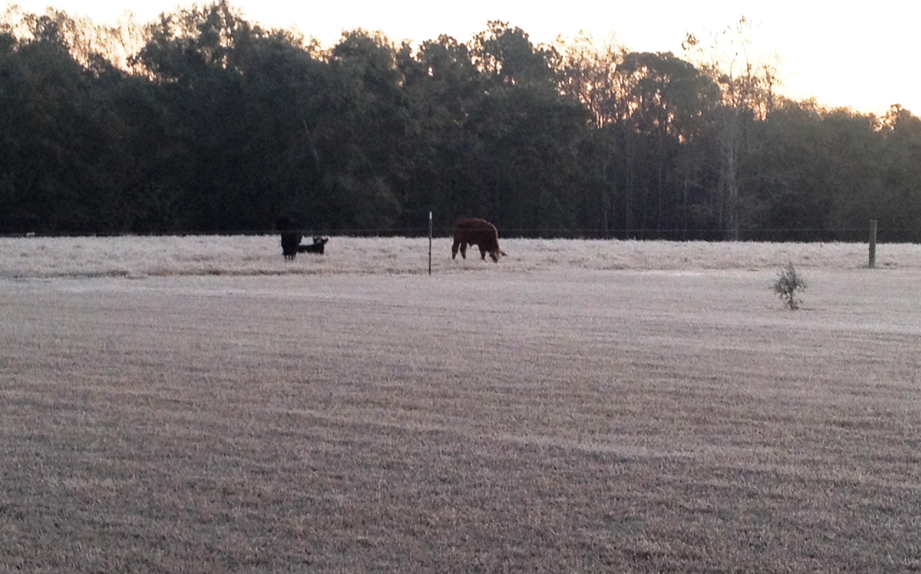Liquid Feeds for Winter Cattle Supplementation | Panhandle Agriculture