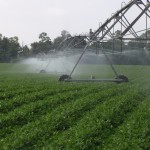 Florida's Valuable Water Resources and the Importance of Irrigation Efficiency