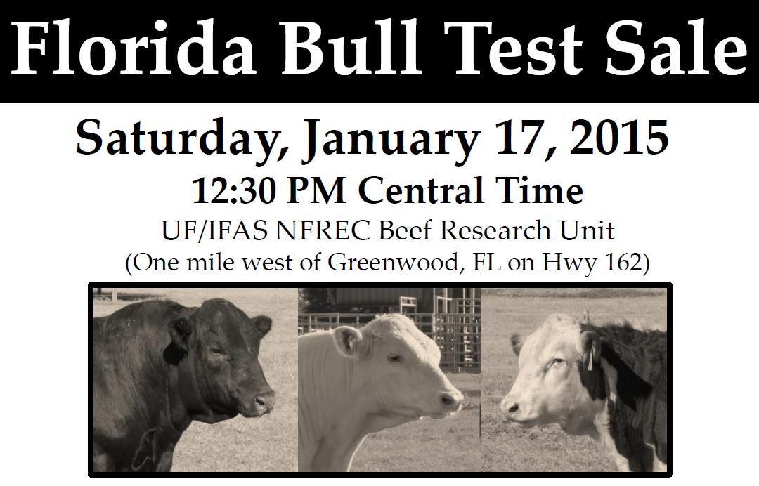2105 FL Bull Test Sale Header