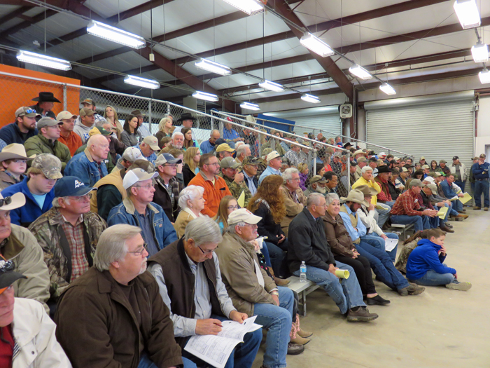 A standing room only crowd paccked the Bull Sale Arena at NFREC.  56 bulls sold for a record average price of $  4500