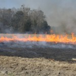 Winter Burns Benefit Bermudagrass Hay Fields