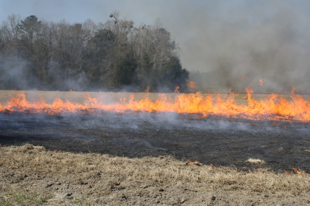 Controlled burn of a Bermudagrass Hayfield