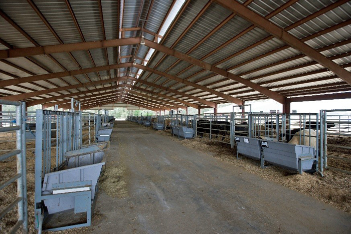 Feed Efficiency Facility where bulls are housed to obtain individual feed efficiency data.