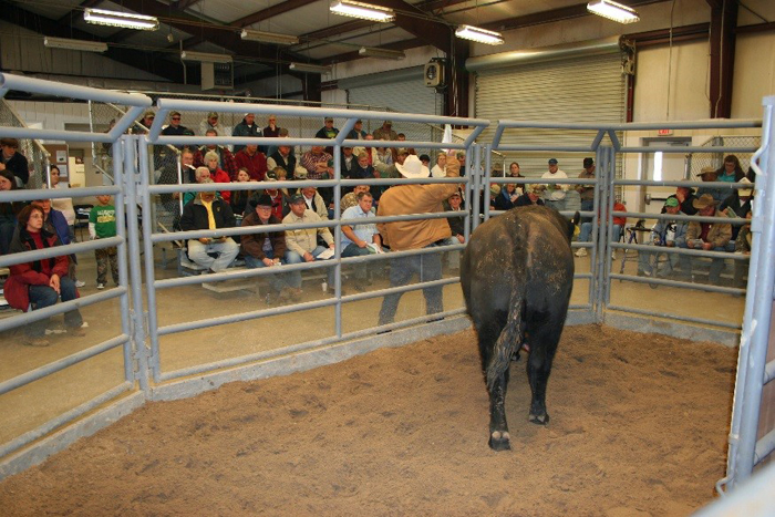 Videos and Catalogs Available for Florida Bull Test Sale – January 16