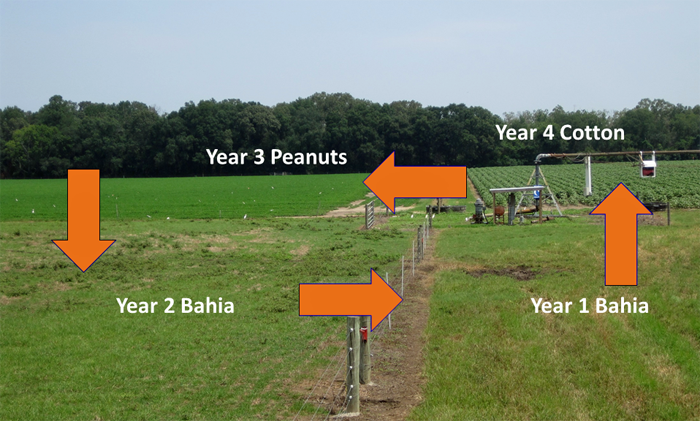 Crop Rotation May Determine the Profitability of Peanuts in 2015 |  Panhandle Agriculture