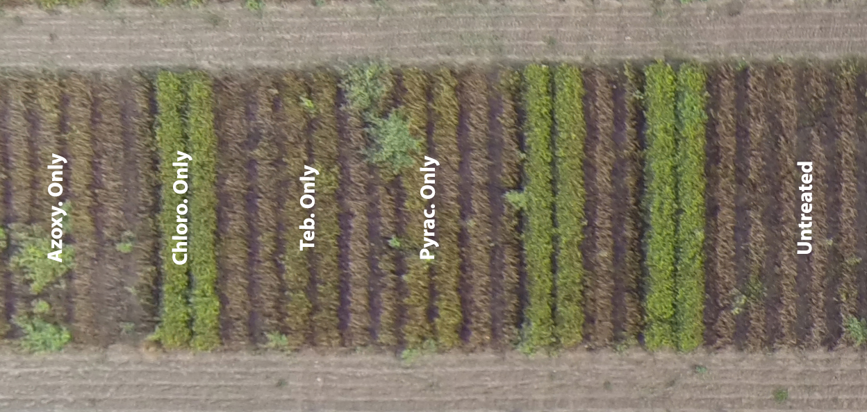 Figure 2.  Example plots from the 2014 leaf spot fungicide trial in Citra, FL showing visual results of the different fungicide treatments on 10/22/15. The treatments consisted of an untreated check (no sprays) and a 7 spray program using only chlorothalonil (Echo 720 @ 1.5 pts/A, Chloro. Only), tebuconazole (TebuStar @ 7.2 fl oz/A, Teb. Only), azoxystrobin (Abound @ 18 fl oz/A, Azoxy. Only) and pyraclostrobin (Headline @ 9 fl oz/A, Pyrac. Only).