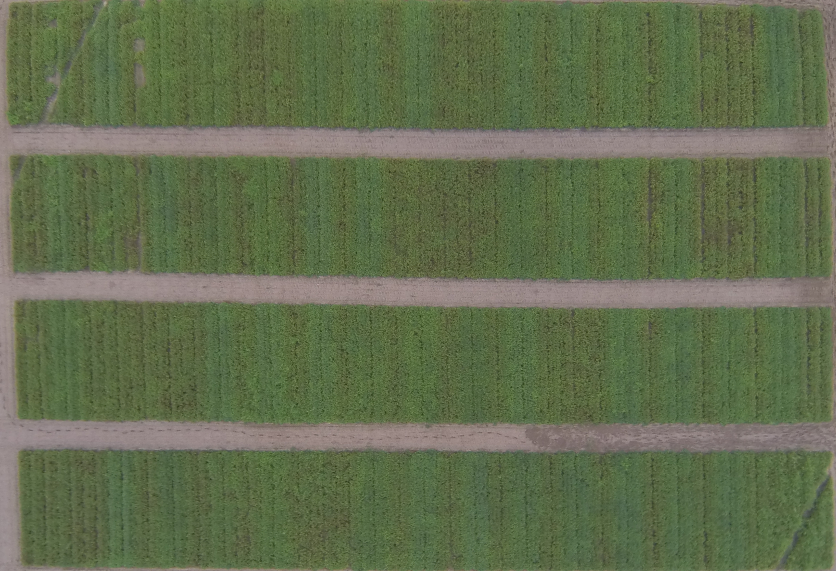 Figure 1. An aerial image of 2014 peanut leaf spot fungicide trial from the University of Florida Plant Science Research and Education Unit in Citra, FL on 9/25/14.