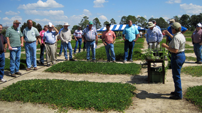 Dr. Ann Blount discusses her work in perennial peanut varieity selection at the 2014 Perennial Peanut Field Day held in Quincy.