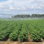 Enhancing Sustainability Options for Farmers