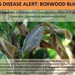 Boxwood Blight Update: Disease Confirmed in Leon County