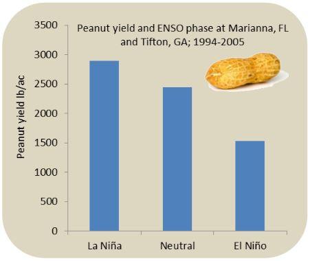 El Nino Affect on Peanuts