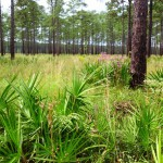 Florida's Rangeland and the Environment: A Natural Partnership