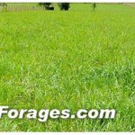 AL Forage Header