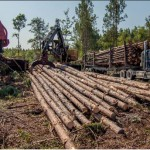 Forest Stewardship Workshop : Sell Your Timber for What it's Worth – May 25