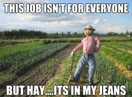 Hay is in my Jeans