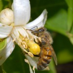 Honey Bee Health & Best Management Strategies – August 30th