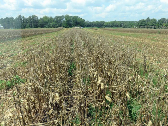 Jackson Corn Combine View