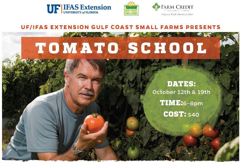 tomato school1