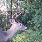 Wildlife Food Plot Fundamentals Workshop October 8th