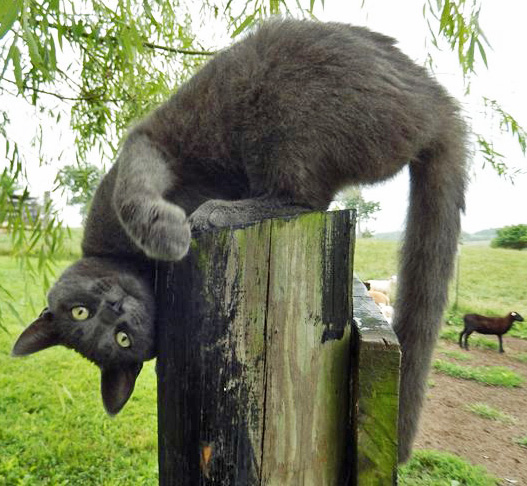 Friday Funny Putting The Cat Out Panhandle Agriculture