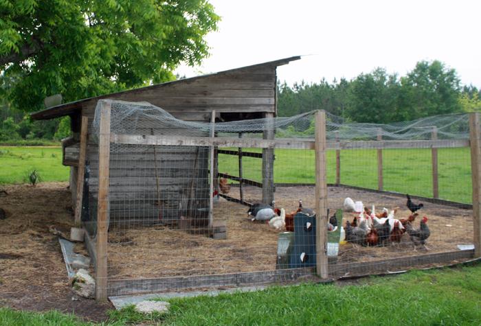 White chicken coop