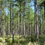 Timber Tax Workshops for Landowners, Foresters, Accountants, and Attorneys – January 23, 26, or 31