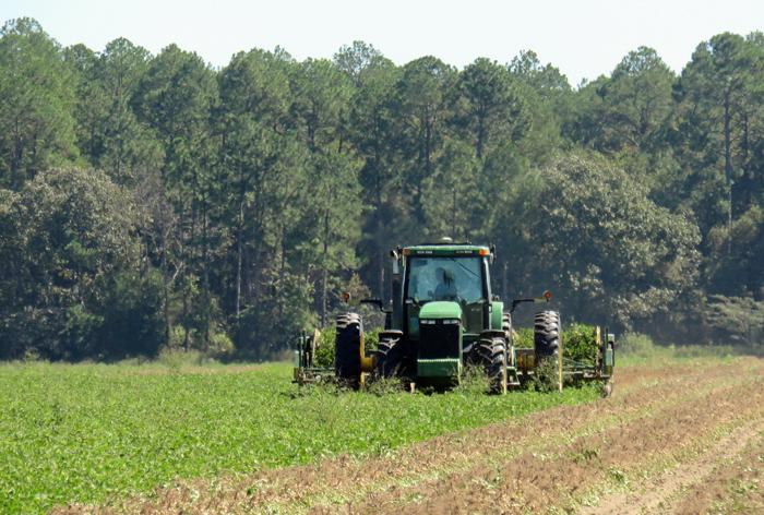 Peanut Production Resources on the New Florida Peanut Team Website