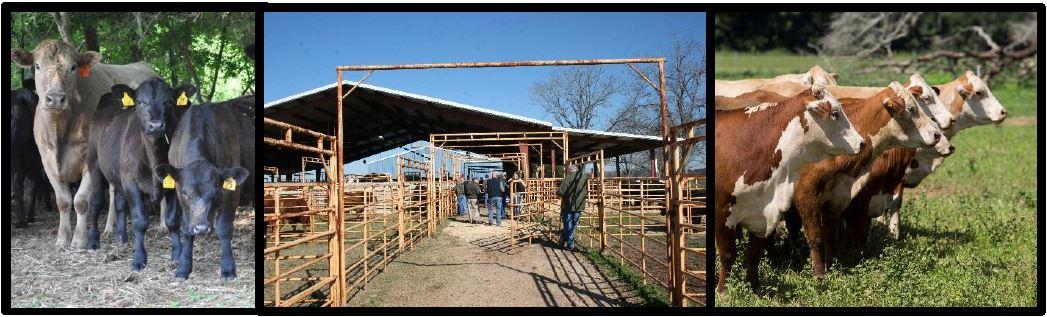 NFREC Beef Unit Silent Auction