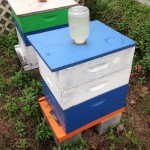 Preparing Your Honey Bees for Winter