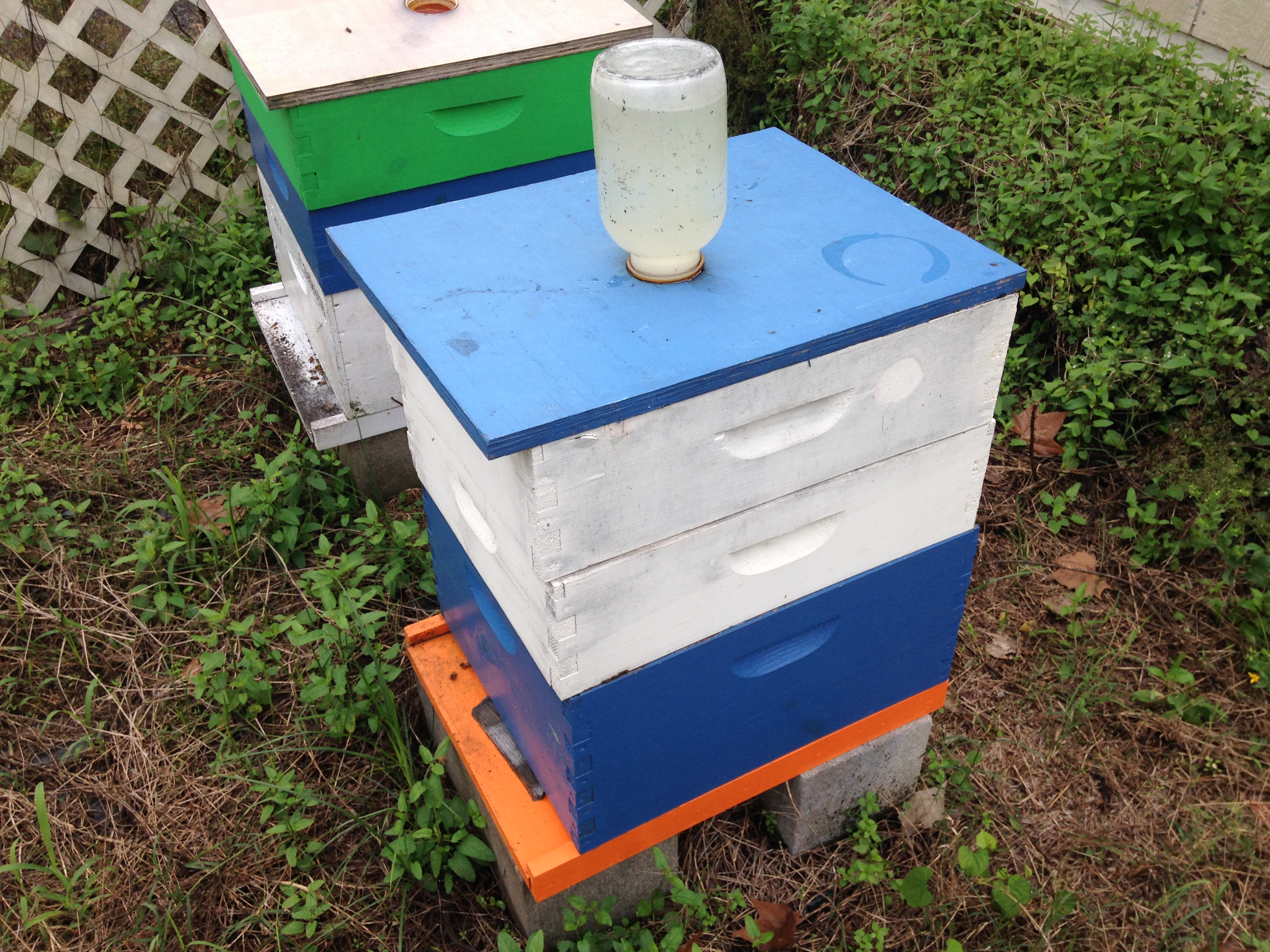 Bees with food
