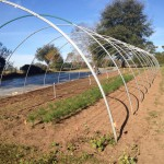 Cold Protection Tips for North Florida Vegetable Farmers